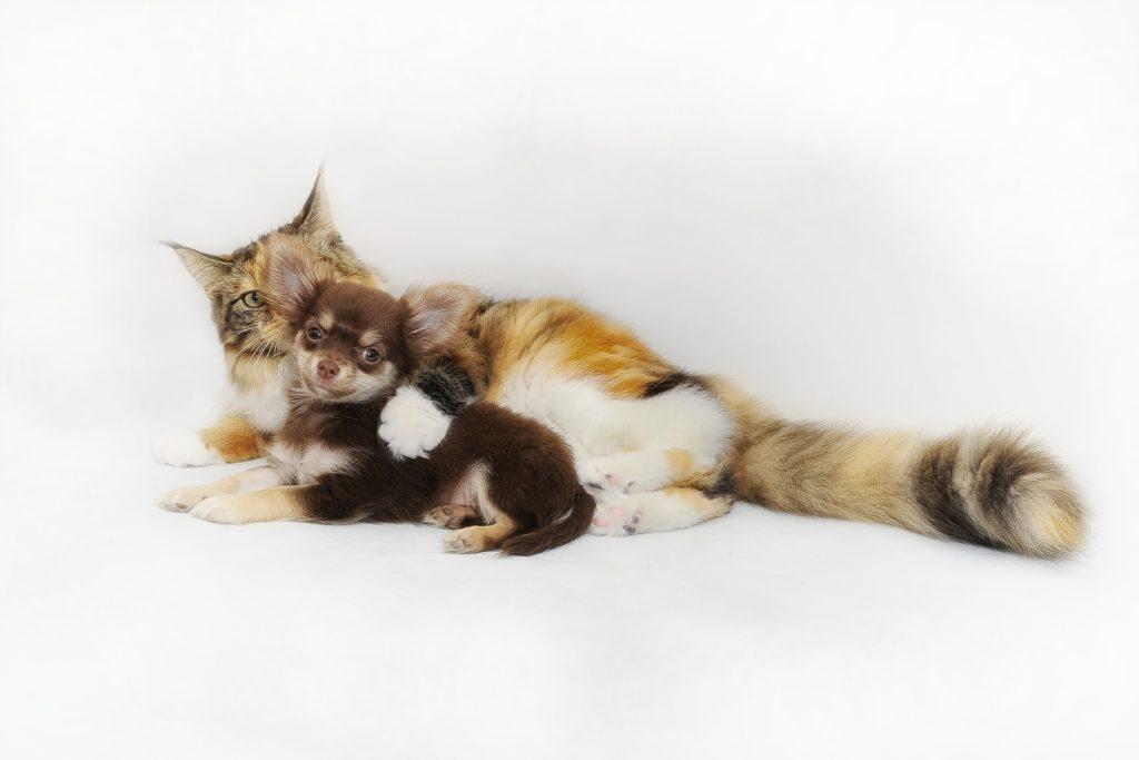 Kot leżący z psem