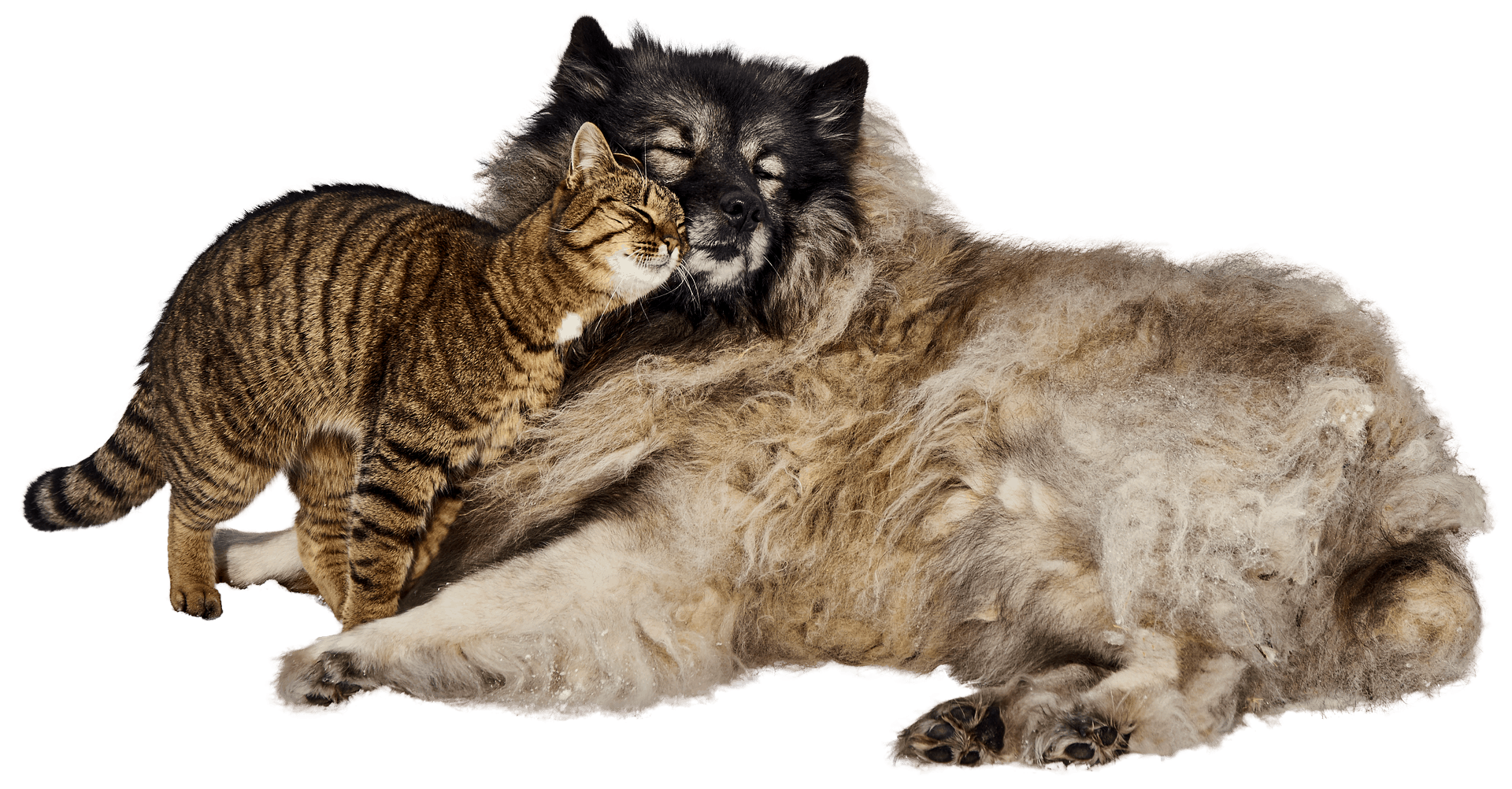Kot przytulający psa