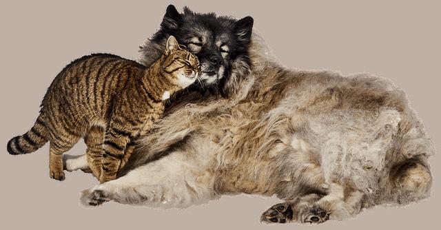 kot przytulajacy psa