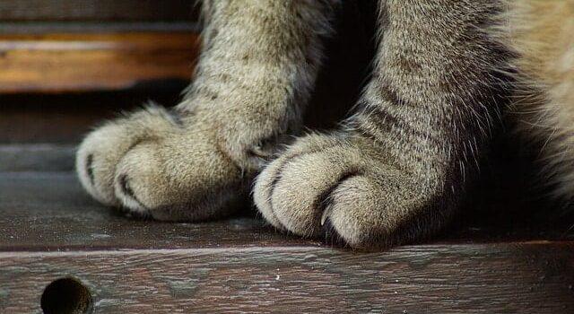 Łapy kota