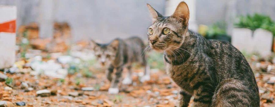 Dwa koty na dworze