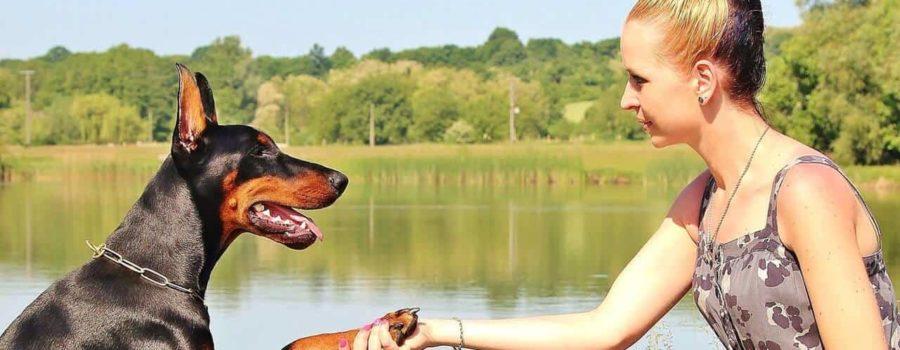Pies podający łapę kobiecie