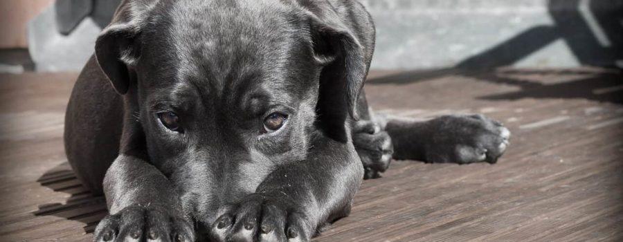 Objawy choroby u psa