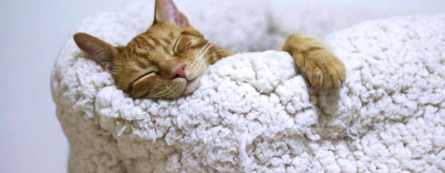 Śpiący kot w legowisku
