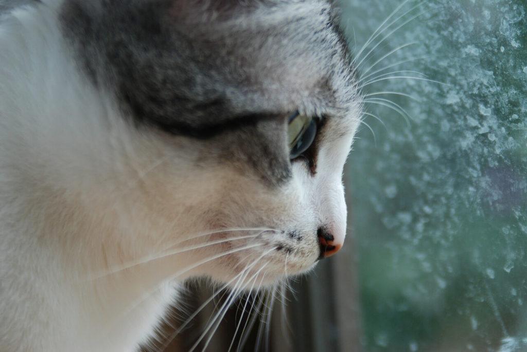 Kot obserwujący świat na zewnątrz przez okno