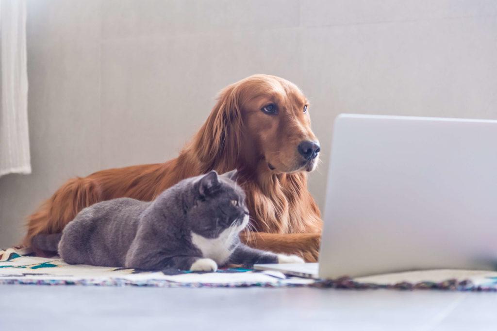 Pies i kot siedzą przy laptopie