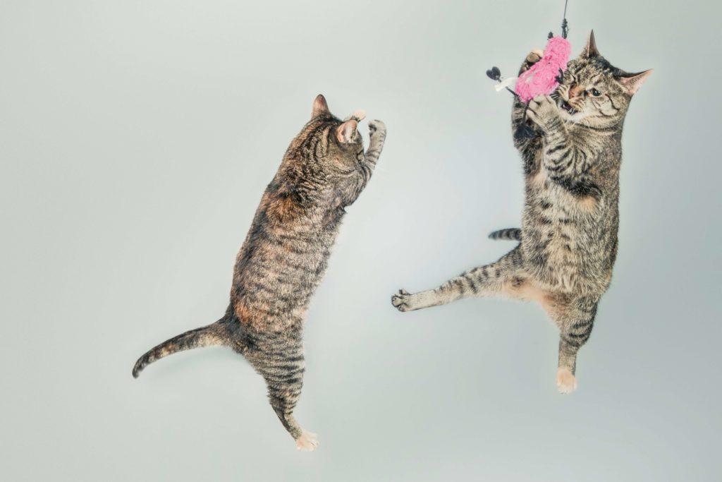 Kot podczas zabawy