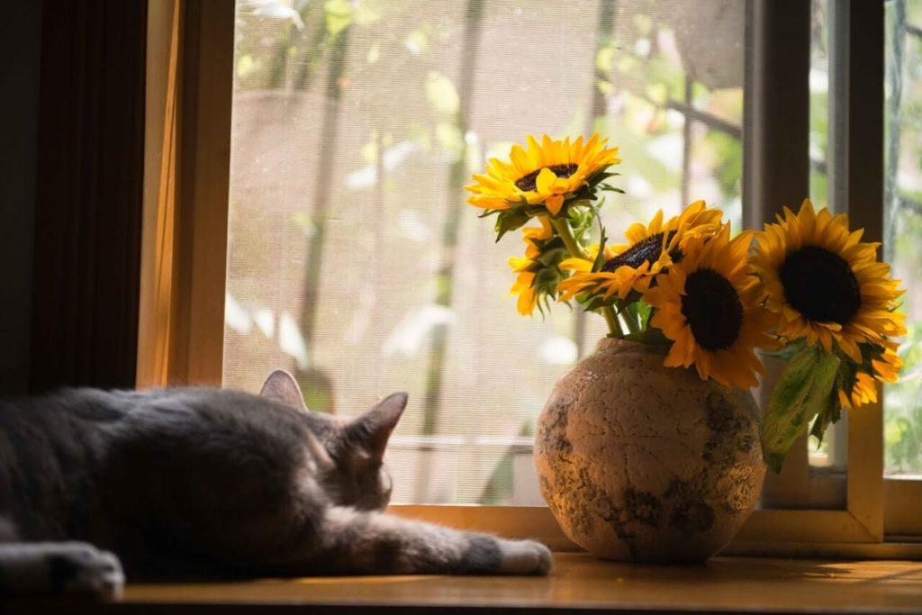 Kot leżący obok kwiatka