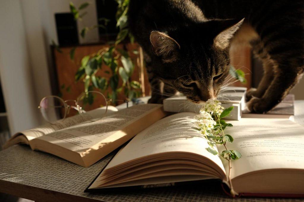 Kot wącha roślinę