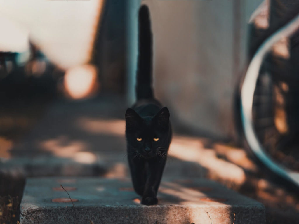 Czarny kot na zewnątrz