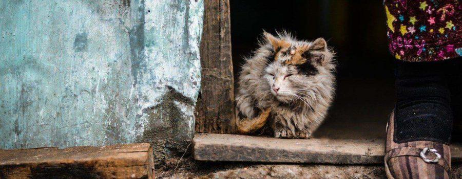 Objawy choroby u kota