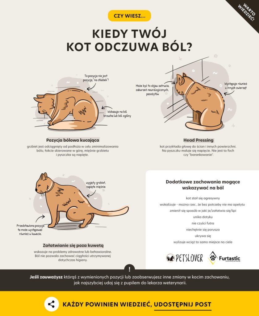 Pozycje bólowe u kota