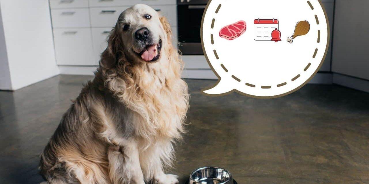 Giardia u psa leczenie