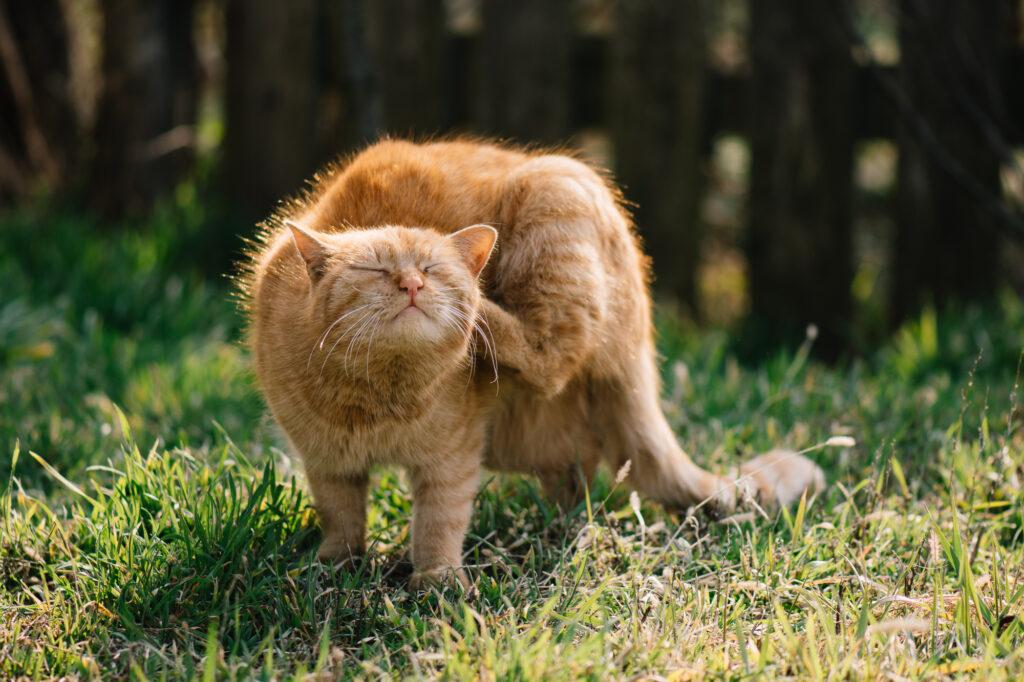 Drapiący się kot