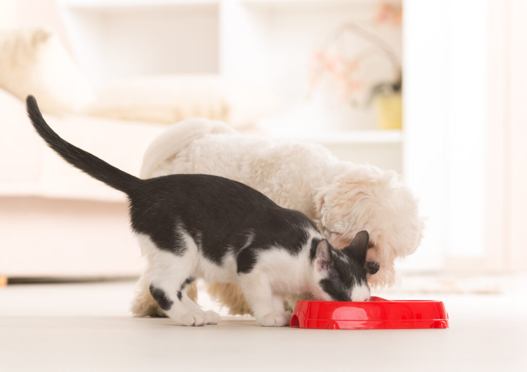Kot i pies je z miski