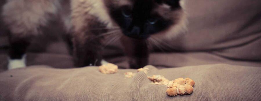 Odkłaczanie kota - skuteczne sposoby