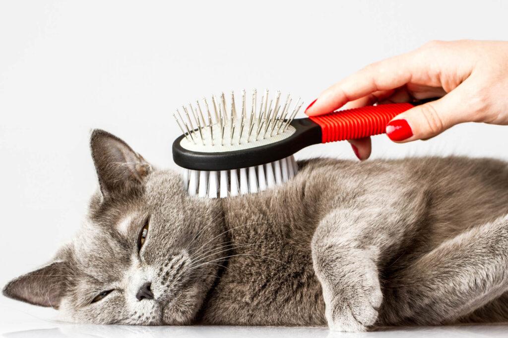 Wyczesywanie sierści kota