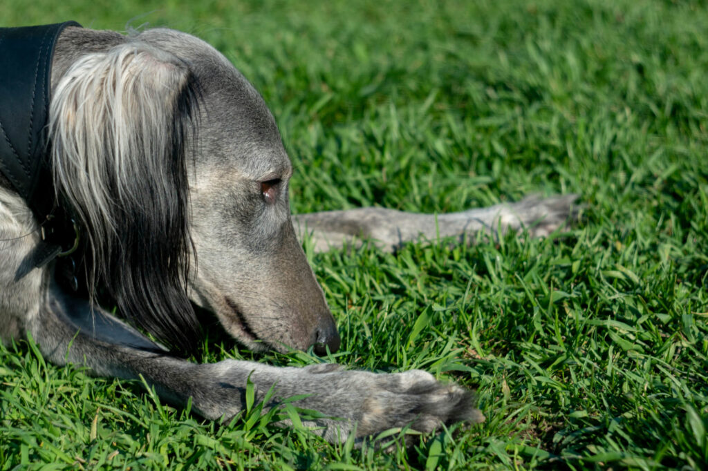 Pies jedzący trawę